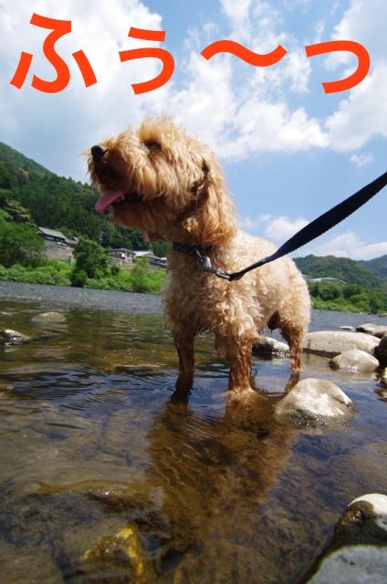 犬と川の画像