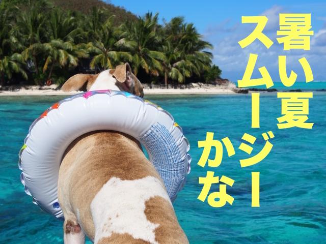 夏の犬の画像
