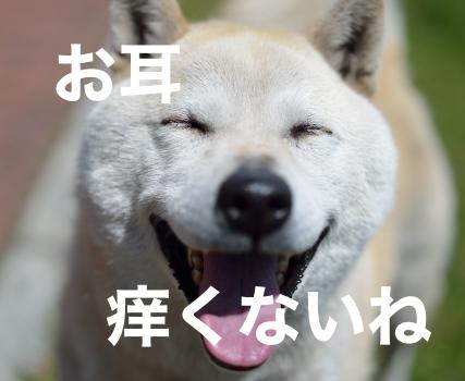 犬の笑顔の画像