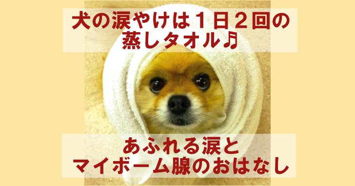 犬の涙やけには1日2回の蒸しタオル