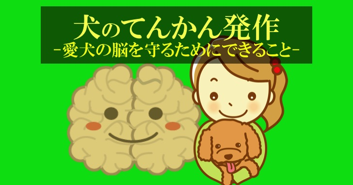犬のてんかん発作、脳を守るために飼い主ができること