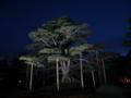 夜の根上松之圖
