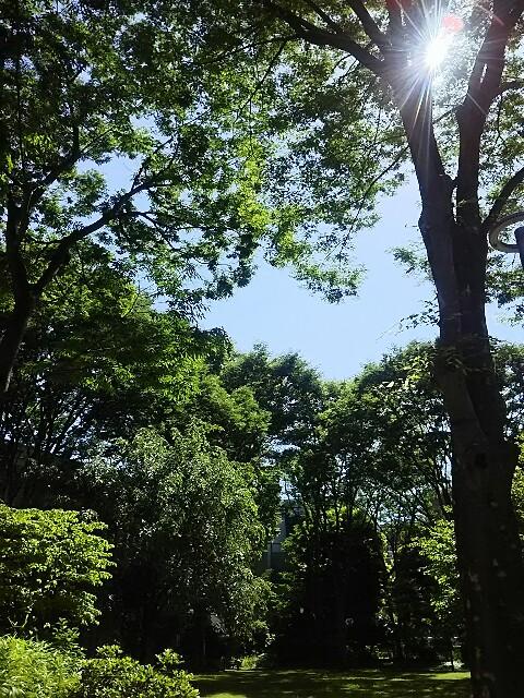 f:id:d-nagasaki:20180601173824j:image