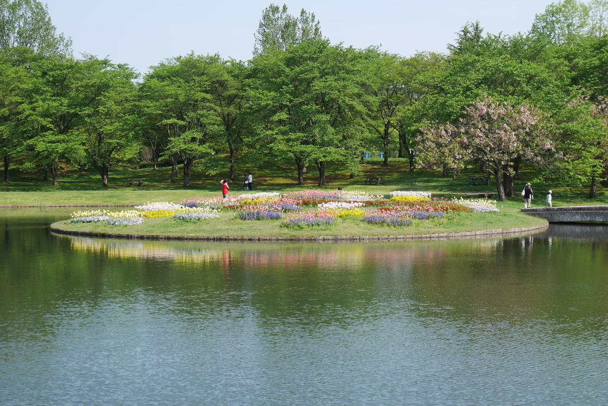 池に浮かぶチューリップ畑