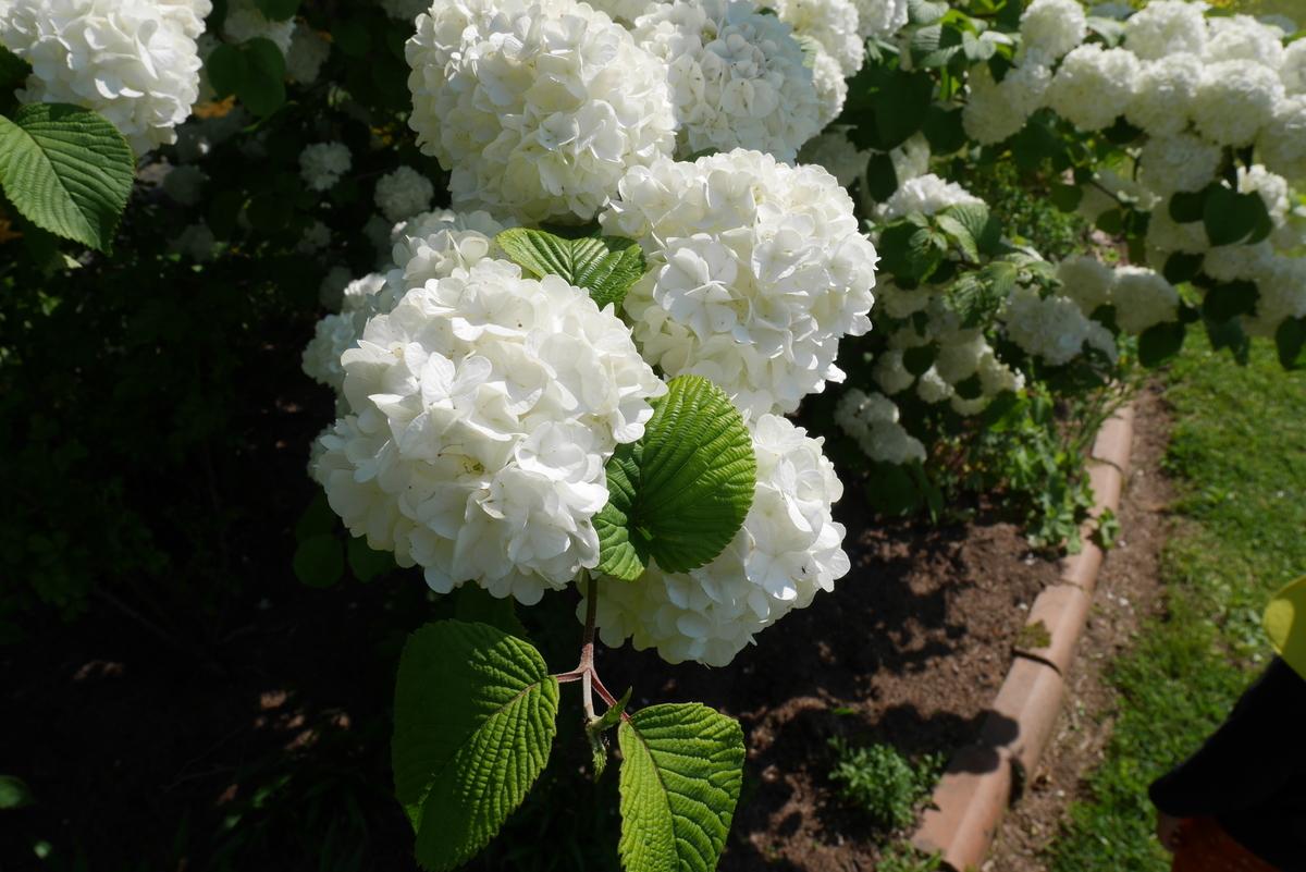 泉ボタニカルガーデン、きれいな花がたくさん