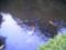 佐倉城址の池(2008年8月31日)