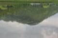京都新聞写真コンテスト モネの池のように