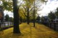 京都新聞写真コンテスト街中の秋