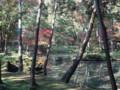 [*京都][京都_苔寺]