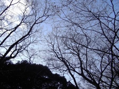 f:id:da-i-su-ki:20110104151922j:image