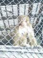 静岡県東部の噛みつき猿