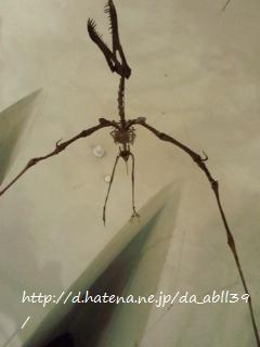 f:id:da_abll39:20111124073203j:image