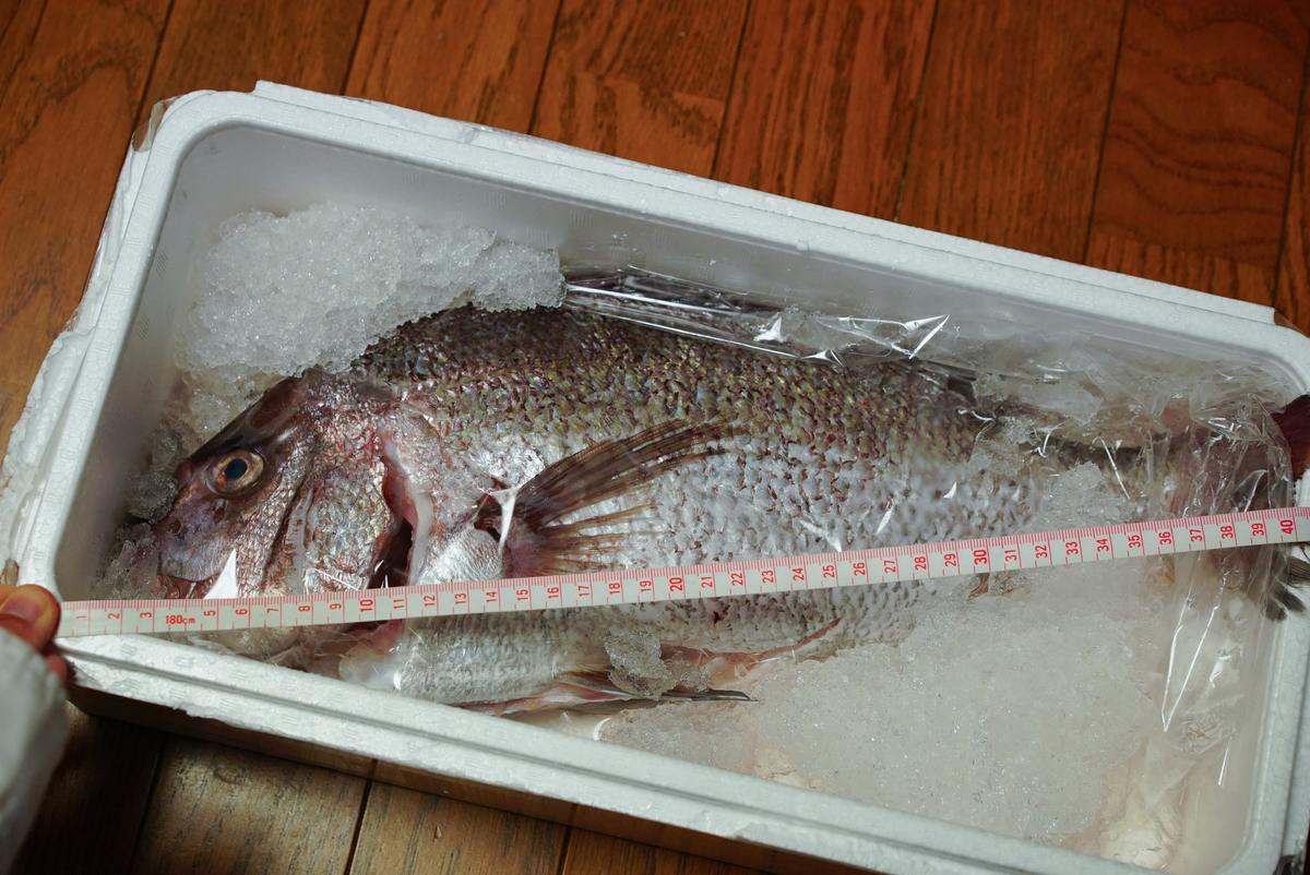 40cmの鯛