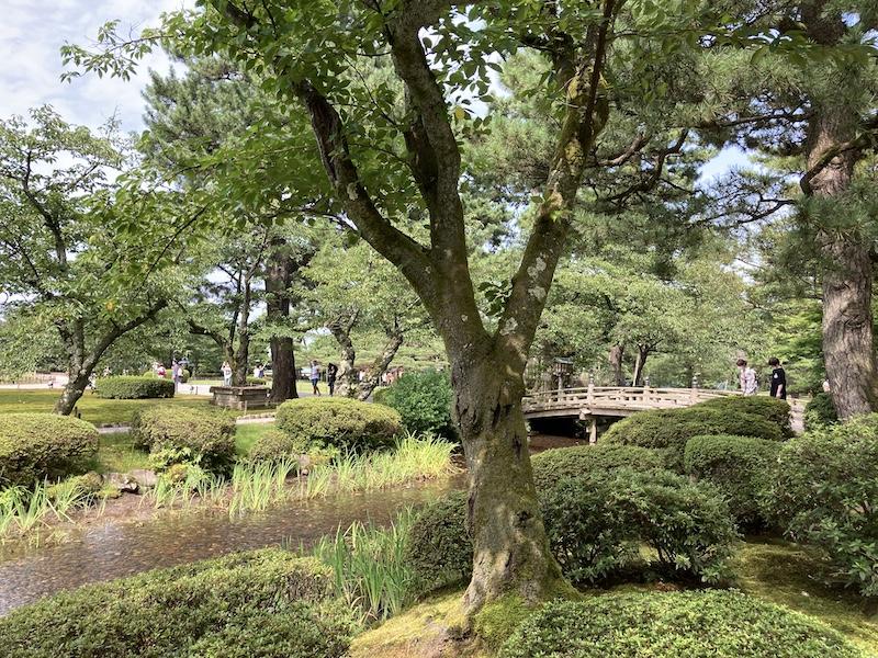 f:id:dachikusakun:20200810121849j:plain