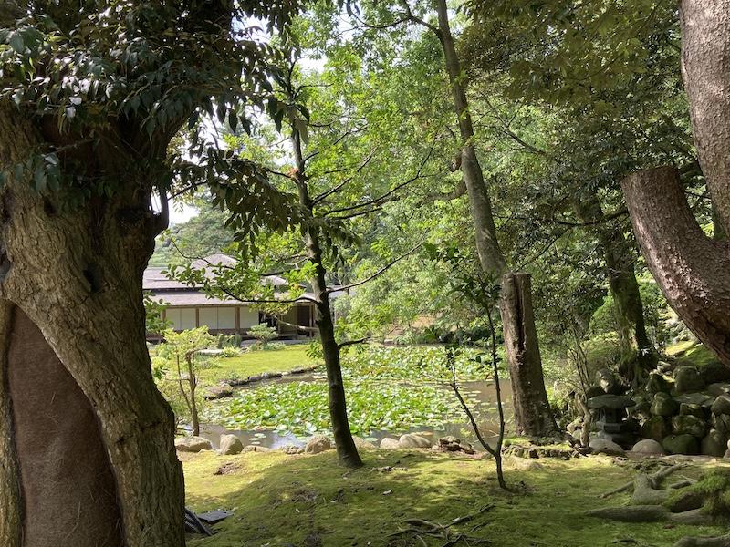 f:id:dachikusakun:20200810121859j:plain