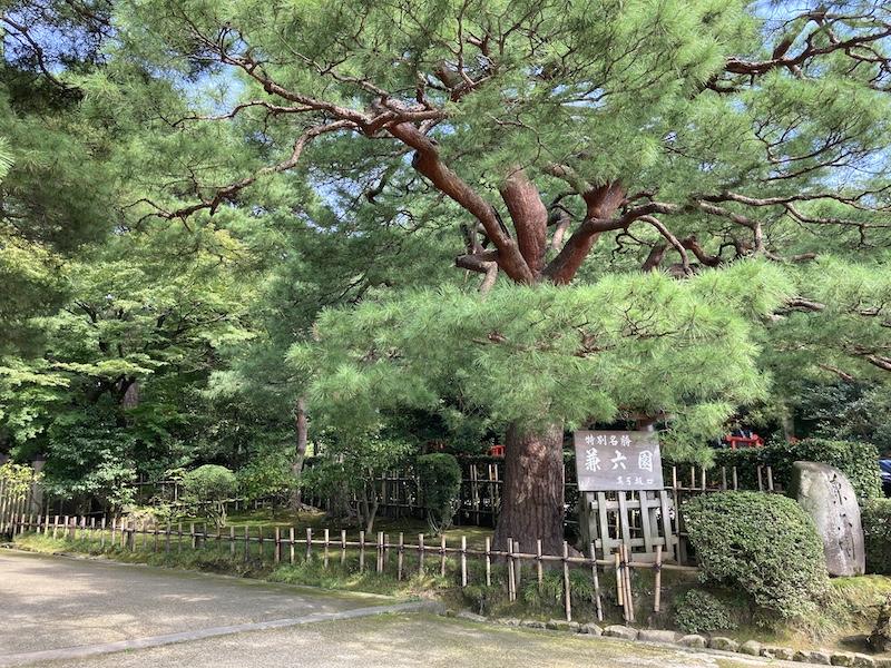 f:id:dachikusakun:20200810121925j:plain