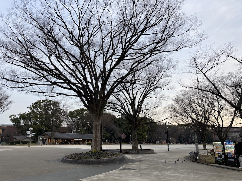 f:id:dachikusakun:20210215180341j:plain