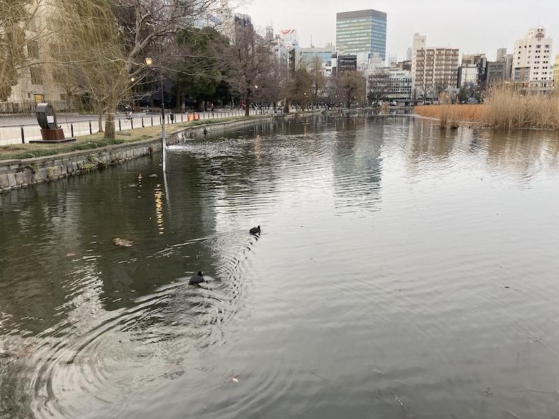 f:id:dachikusakun:20210215180417j:plain