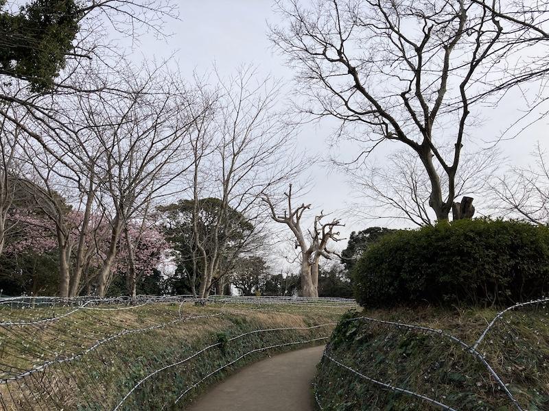 f:id:dachikusakun:20210215181152j:plain