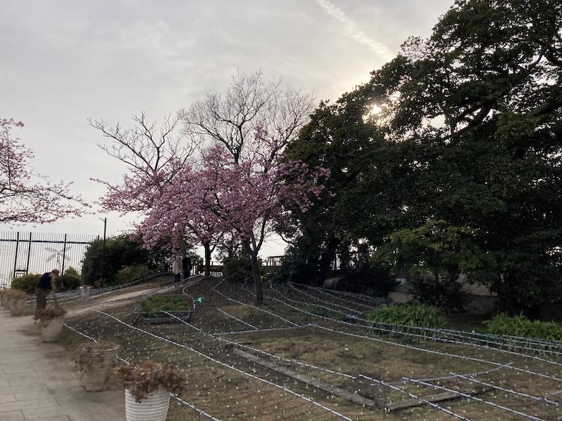 f:id:dachikusakun:20210215181155j:plain