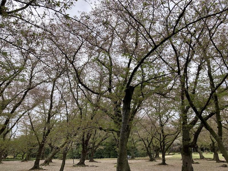 f:id:dachikusakun:20210506232047j:plain