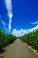 [2010.08.14][宮古島][彩雲][さとうきび]