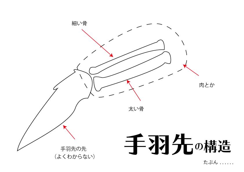 手羽餃子に使う手羽先の構造