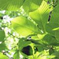新緑03|呼吸|瞑想