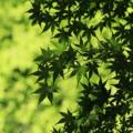 新緑04|呼吸|瞑想
