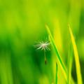 新緑05|呼吸|瞑想