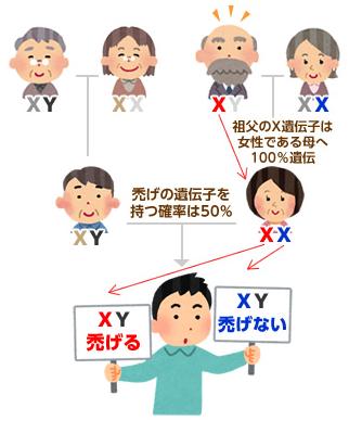 X染色体の遺伝