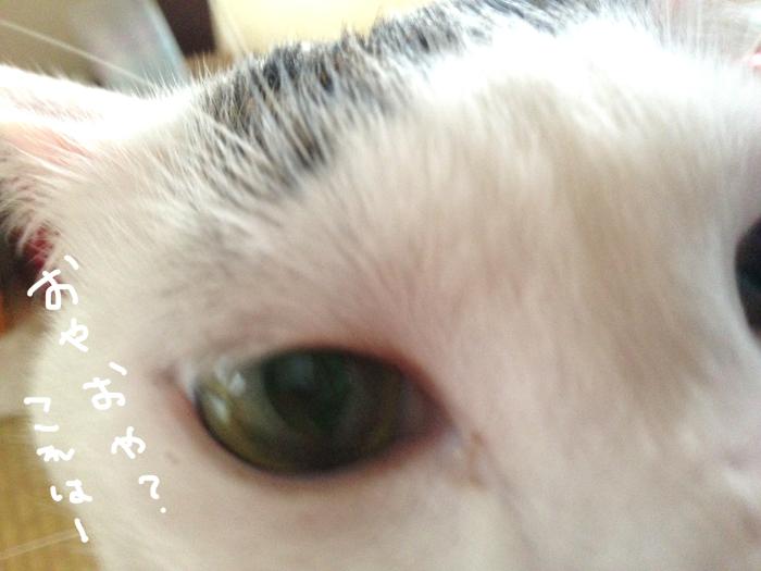 残念なくらい食べ方がきたないヅラ猫。美味しいおやつを堪能したよ♪