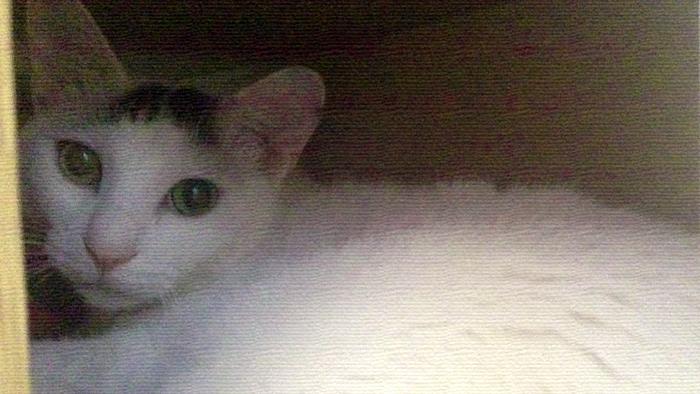 f:id:dai5ro-cat:20160802123216j:plain
