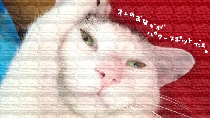 f:id:dai5ro-cat:20160810193955j:plain