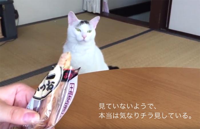 f:id:dai5ro-cat:20160812113451j:plain