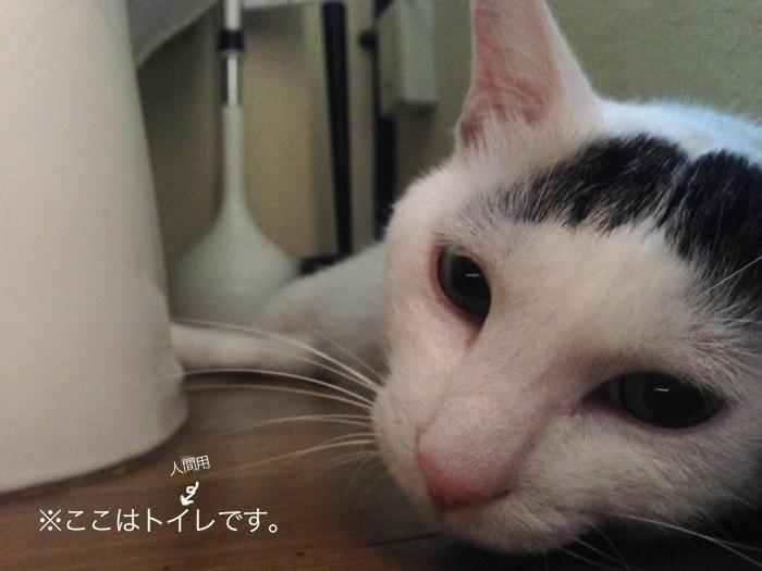 f:id:dai5ro-cat:20160822112022j:plain
