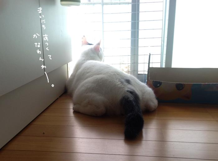 f:id:dai5ro-cat:20160822112035j:plain