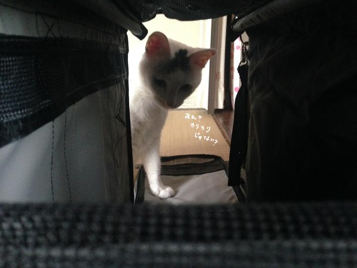 f:id:dai5ro-cat:20160912121530j:plain