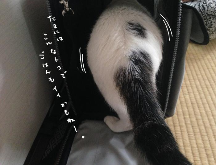 f:id:dai5ro-cat:20160912121603j:plain