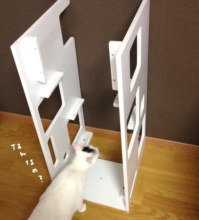 キャットタワーを大五郎にプレゼント♪キャッツデポの「キャットスクエア シェルフスタイル」