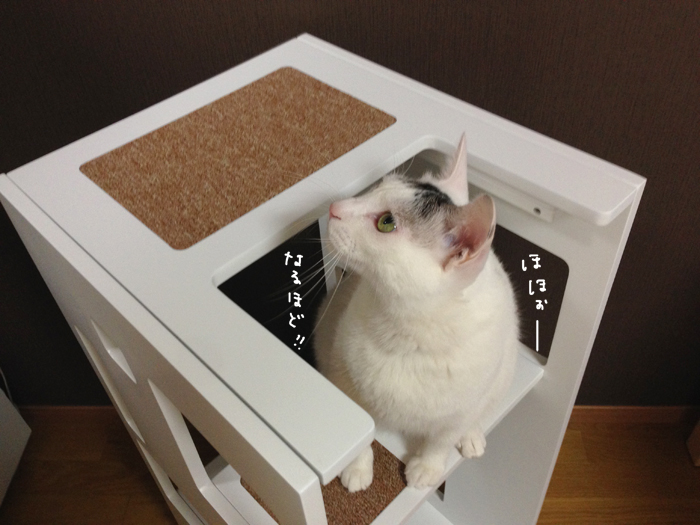 f:id:dai5ro-cat:20161012130326j:plain