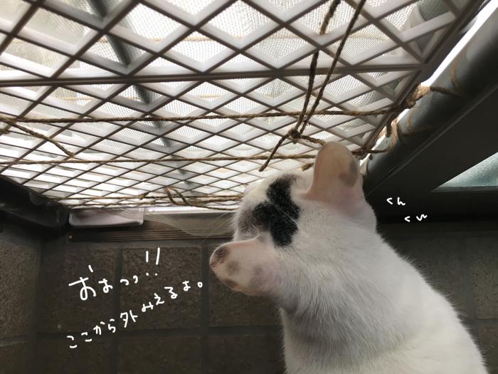 猫ためのDIY! ヅラネコ用の簡易網戸を作ってみました!!