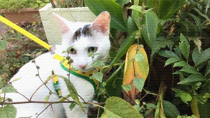 f:id:dai5ro-cat:20161104111817j:plain
