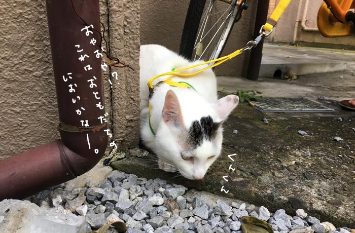 f:id:dai5ro-cat:20161104111958j:plain