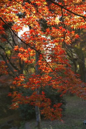 f:id:daichi-55:20071125151153j:image