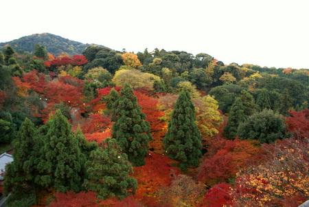 f:id:daichi-55:20071201063112j:image