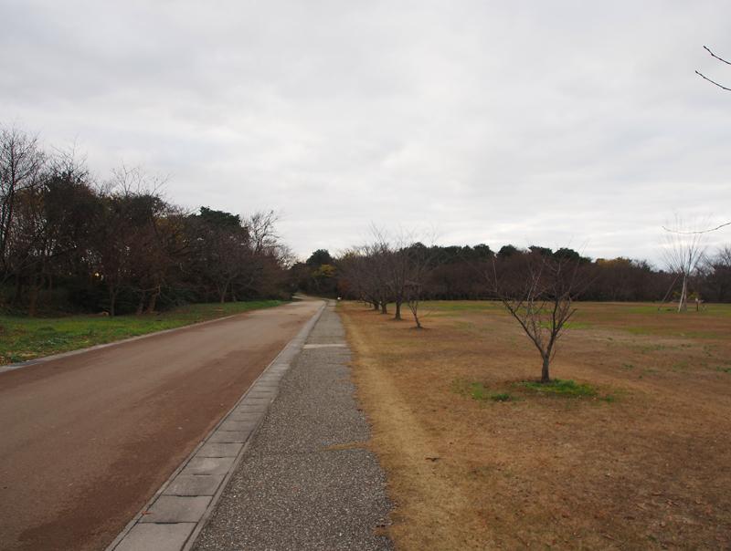 f:id:daichi76y:20161230084212j:plain