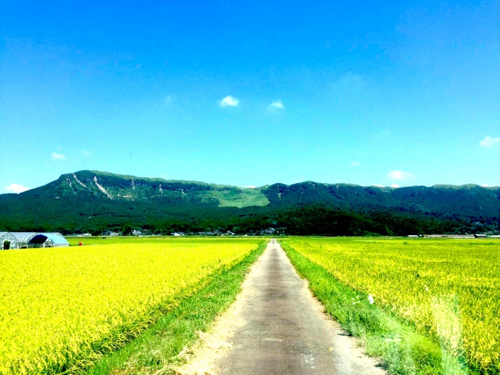 f:id:daichishido:20170412012311j:plain