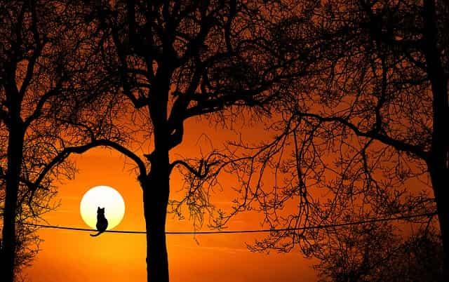 夕陽を見つめる猫