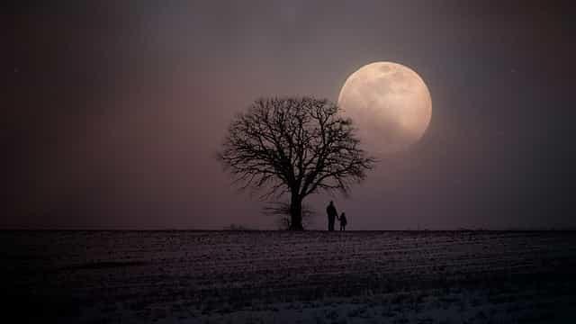 木の下に立つ親子